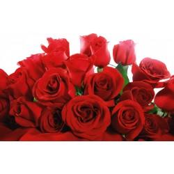 Buchet din 99 Trandafiri olanda