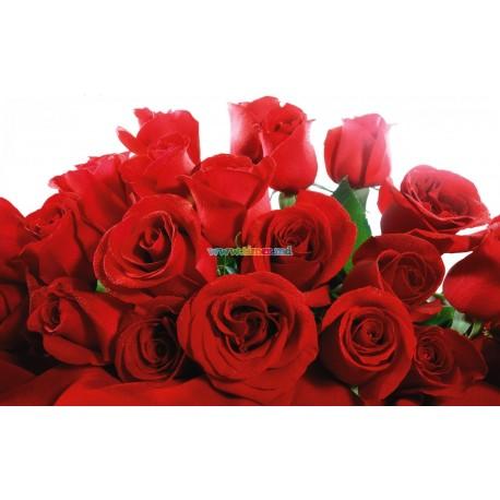Buchet din 25 Trandafiri olanda